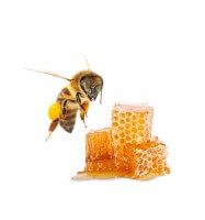 Duft-Geldose, Honig